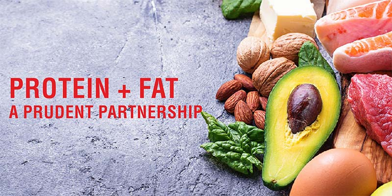 Understanding The Intimate Relationship Between Protein And Fat